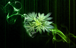 Cannabis WP by eternalrabbit