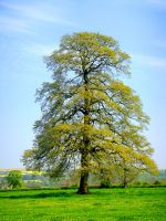 The Other Tree by robertoalamino