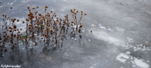 Growing Through Ice by KHproject365