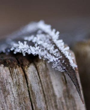 Hoar frost by InDiesemMoment