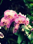 Orchid Extravaganza by Elzo-is-the-name