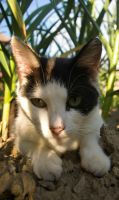 Our Cat by BinLadin007