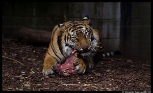 Binjai's Meal by TVD-Photography