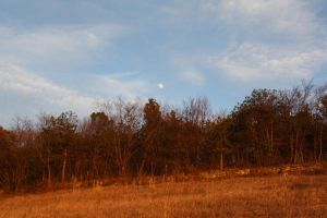Moon Day by Swaami