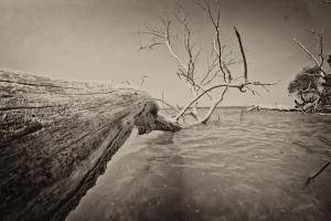 Death by high tide by denehy