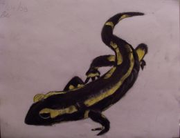 Yellow Spotted Salamander by wolfgrl1492