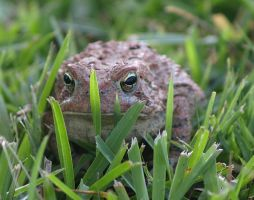 Toad 2 by texasghost