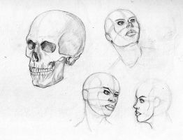 Another Skull... by Tropical-Conspiracy