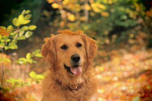 Autumn Dog by photographybyteri