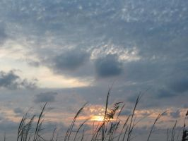sea oat sunset by dreadedhippie