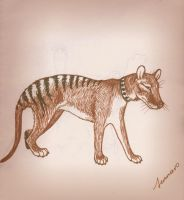 Gift The Thylacine by jennarotancrede