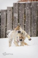 Frolicking in the Snow II. by Czertice