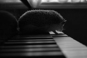 hedgehog piano by hedgiehog1