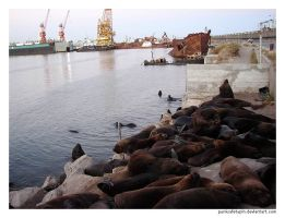 Sea Lions by punksafetypin