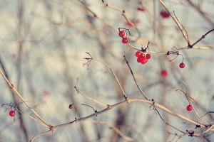 Even in winter by Noina