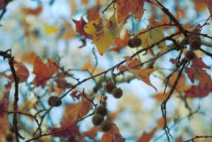 .Autumninlove by tgphotographer