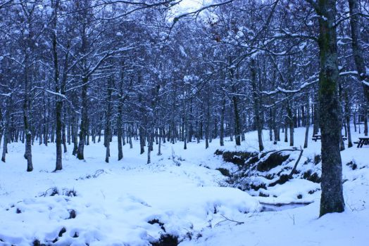 Winter Forest by Nubilus1