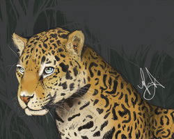Jaguar by mrslong