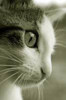 through the eyes of a cat by Patricia-b