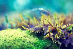 moss. by Altingfest