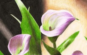 Calla Lilies by EvaHolder
