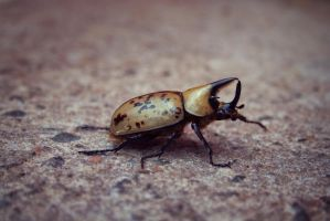 Horned Beetle by phydeau