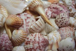 Seashells texture 2 by paintresseye