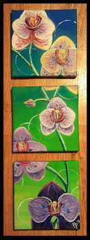 2013 Orchids by AngiePip