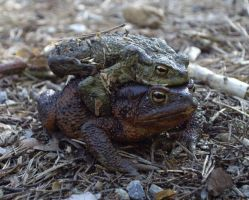 Toad Love by decors