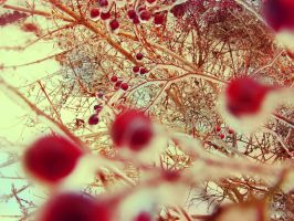 Whimsical Winter by Morna
