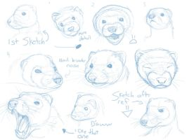 Ferret Sketches by Temiree