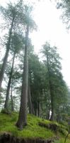 Vertical panoramic trees by OmerTariq