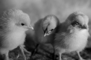 Three Amigos by OniPhotography