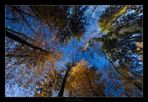 In the Woods - 03 by AndreasResch