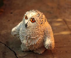 Owl by hontor