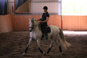 Andalusian 1 by Chance-STOCK