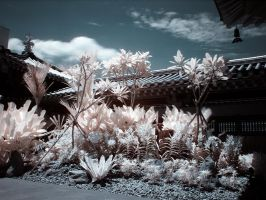 iNfraRed series - cHinatOwn 1 by shin-ex