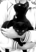 Two black cats.... by WhisperInTheDark666