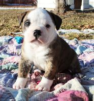 Timothy by NobleBulldogges