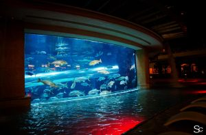 Now that's an aquarium! by ShannonCPhotography