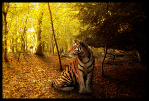 A wish upon the woodland tiger by Dark-Oak-Trails