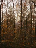 Two pines in autumn by yuushi01