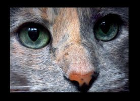 Hawt Eyes V by AtherNess