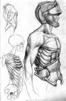 Anatomy Studies 1 by JackalAnubis