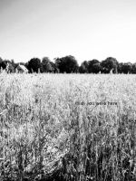 So you think you can tell by goudlokje