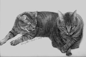Final Drawing - Cats by flowercs
