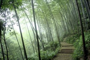 Trail in the Bamboo Forest by dbz-fan-jess
