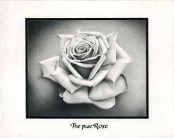 The pure Rose by Viatan