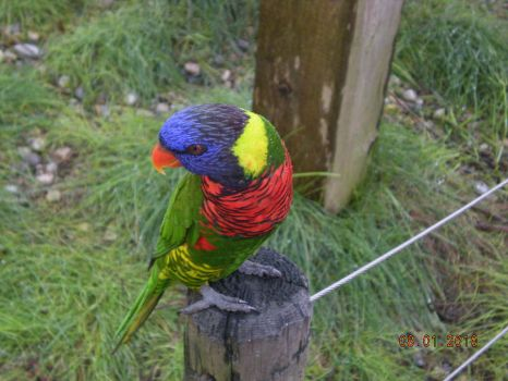 Parrot 2 by abcjohnson1834