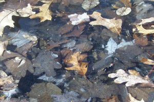Frozen Water And Leaves by JCoinster